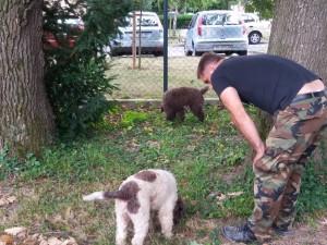 Tropienie Trufli w ogrodzie Uniwersytetu w Zagrzebiu